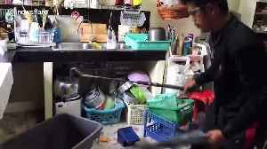 Woman terrified after finding 8ft cobra in kitchen [Video]