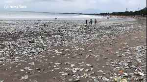 Shocking footage of Bali beach swamped by plastic waste [Video]
