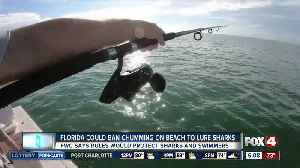 Florida preparing statewide ban for chumming near the shore [Video]