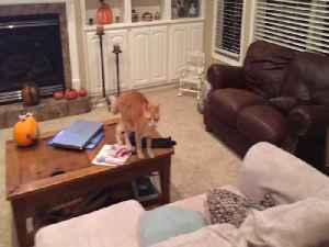 Cat and Dog have Sibling Spat [Video]