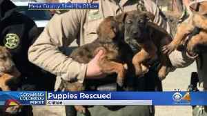 Mesa County Sheriff's Deputies Rescue Puppies From Bitter Cold [Video]
