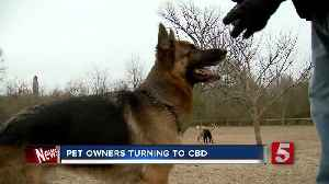 Vets discuss CBD oil and pets [Video]
