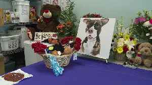 Dozens Celebrate the Life of Tommie the Dog Who Passed Away After Being Set on Fire [Video]