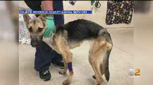 Emaciated Puppy Left At Riverside County Animal Shelter [Video]
