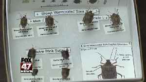 Cold may have killed stink bugs [Video]