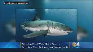 Florida Scientists Help Decode Great White Shark Genome Revealing Clues To Living Longer and Cancer Resistance [Video]