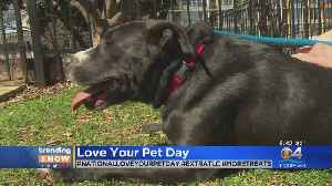 Trending: Love Your Pet Day [Video]