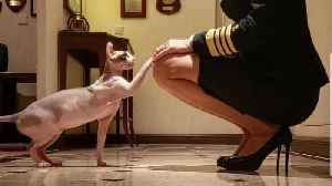 America's First Female Cruise Captain Travels the World With Her Adorable Sphynx Cat [Video]