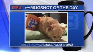Mug shot of the day - Carol from Sparta [Video]