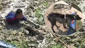 Rescues Wade Through Sinking Mud To Save Stranded Stray Dog [Video]