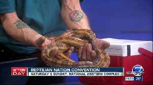 Reptilian Nation Expo in Denver this weekend [Video]