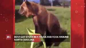 Viral Bear Gets Stuck In Truck And Rides Around This State [Video]