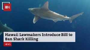 Hawaii Will Ban Sharking [Video]