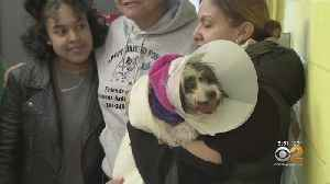 Dog Spotted On NJ TRANSIT Tracks Reunited With Owner [Video]