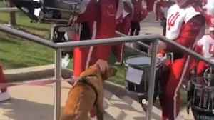 Golden Retriever Gets Pet by Marching Band [Video]