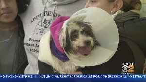 Dog Found On Tracks Reunited With Owner [Video]