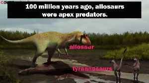 Tiny ancestor of king of the dinosaurs discovered [Video]