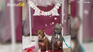 This Doggie Wedding Is The Sweet Story You Need [Video]