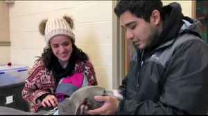VIDEO: Texas family reunites with dog at ARL [Video]