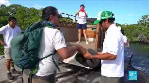 Giant tortoise feared extinct found in Galapagos islands [Video]