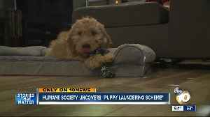 San Diego Humane Society uncovers 'puppy laundering scheme' [Video]