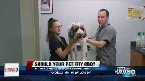 Consumer Reports: Should your pet try CBD? [Video]