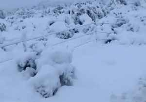 Snow Settles on Cacti After Storm Sweeps Through Scottsdale, Arizona [Video]