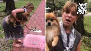 Rich lady has a meltdown over family taking photos in her neighborhood park [Video]