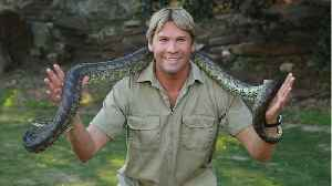 Google Pays Tribute To Steve Irwin On His 57th Birthday [Video]