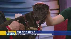 Meet Cici – Our Pet Guest Of The Week! [Video]