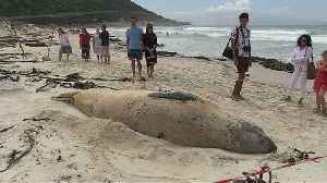 Elephant seal travelled across 6500kms to stay on beach in South Africa [Video]