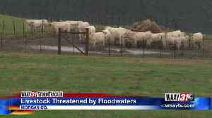 Livestock Threatened by Floodwaters [Video]