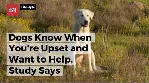 Dogs Actually Do Want To Come To The Rescue [Video]