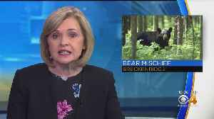 Wildlife Officials Warn Of Two Young Black Bears Roaming Breckenridge [Video]