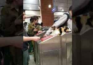 Now That's a Cat Scan: Feline Keeps a Close Eye on Commuters at Israeli Train Station [Video]