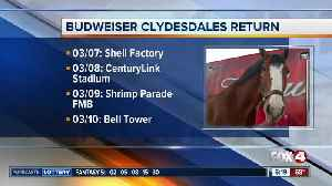 Popular Clydesdales to make Southwest Florida appearances in early March [Video]