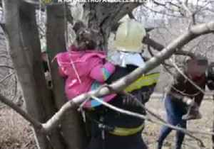 Hungarian Emergency Services Cut Trapped Child Free From Tree [Video]