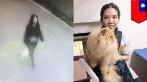 Cat burglar sneaks persians out of Taiwan pretending to be pregnant [Video]