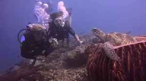 Underwater Close Encounter with a Sea Turtle [Video]