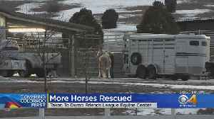 More Horses Rescued From Hartsel & Head To Rehab Facility [Video]