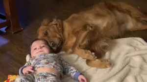 Sweet moment captured on camera between dog and baby [Video]