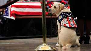George H.W. Bush's Service Dog Gets New Job Helping Veterans And Service Members [Video]