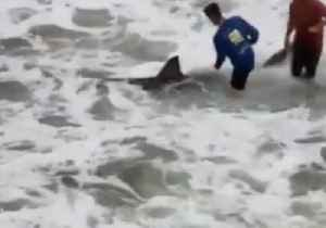 Great White Shark Makes Rare Appearance Off Navarre Beach Fishing Pier [Video]