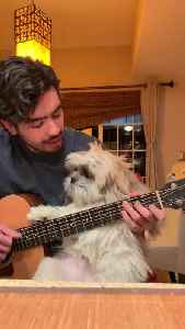 Man serenades his doggy with beautiful Spanish song [Video]