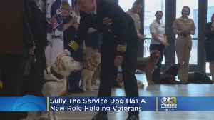 Sully The Service Dog Has New Role Helping Wounded Veterans [Video]