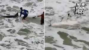 Fishermen wrestle with great white shark [Video]