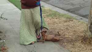 Dog Can't Even Deal with Leash [Video]