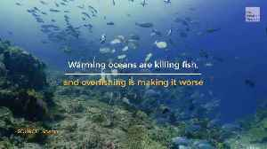 Fish Populations Shrinking, Here's Why [Video]