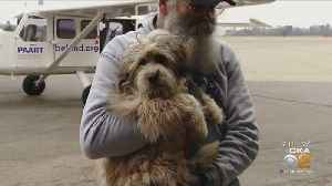 Pittsburgh Aviation Animal Rescue Team Rescues 10,000th Animal [Video]