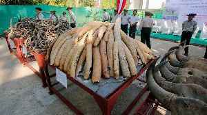 Myanmar destroys confiscated ivory, opens elephant museum [Video]